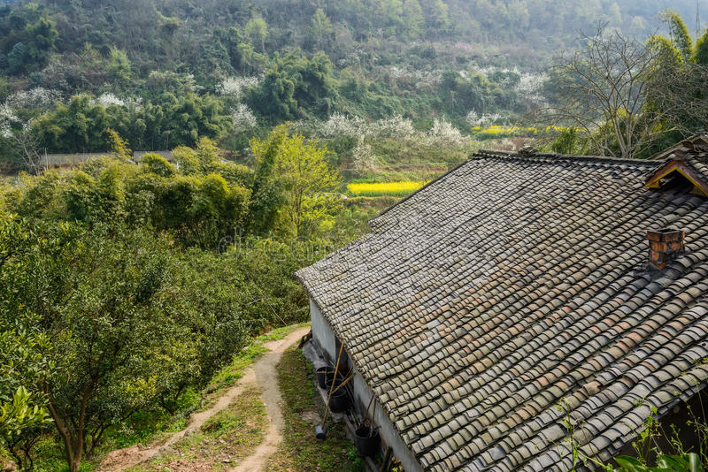 Aged Chinese farmhouse in flowering mountain on sunny spirng royalty free stock photo