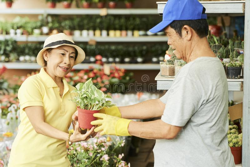 Aged couple buying flowers in store. Senior Asian couple choosing news plants for their garden in flowers shop royalty free stock images