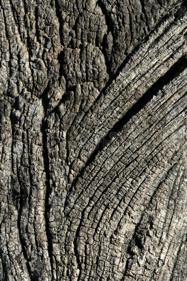 Free Aged Gray Wood Macro Texture For Background Royalty Free Stock Photo - 7532955