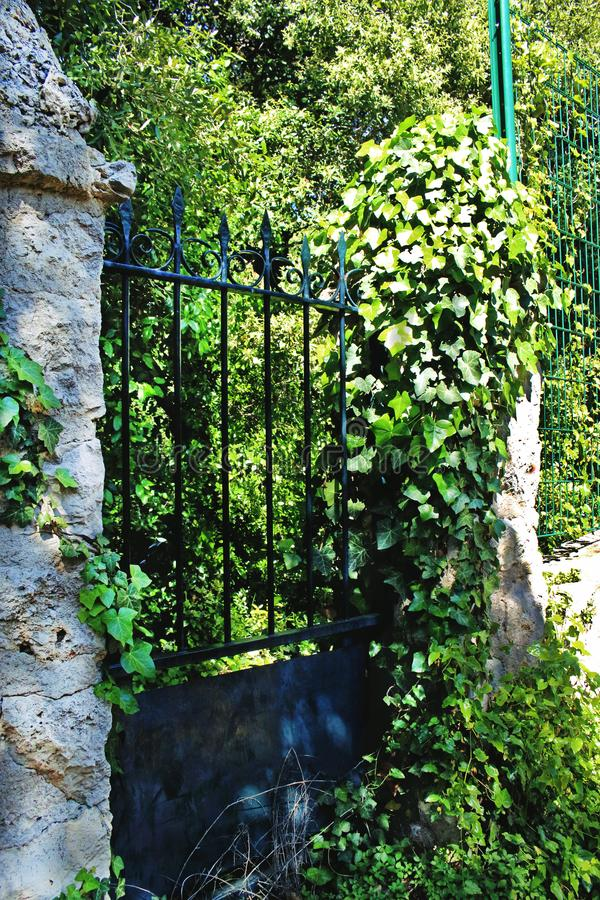 Aged metal gate with green overgrown vines around blocking the entrance. Aged metal gate with green overgrown vines around, fence, background, entrance, nature stock photo