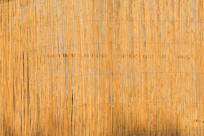 Aged Natural Old Yellow Wooden Board Wall Fence From Bamboo Woods Trunks. Background royalty free stock images
