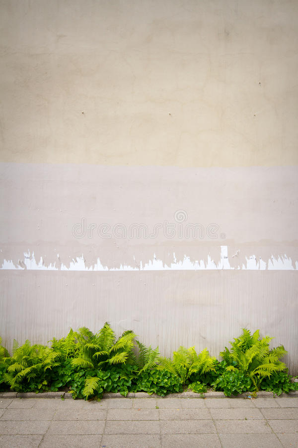 Download Aged street wall stock photo. Image of pavement, building - 33575954