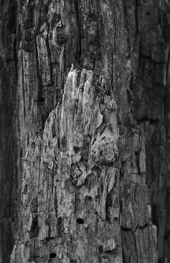 Rough bark on a tree royalty free stock images
