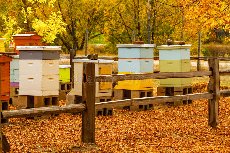 Aged Wooden Bee Hives in Autumn Setting. With bees making honey stock photos