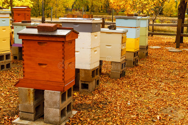 Aged Wooden Bee Hives in Autumn Setting. Colorful aged wooden bee hives in autumn setting with brilliant fall color and fallen leaves royalty free stock images