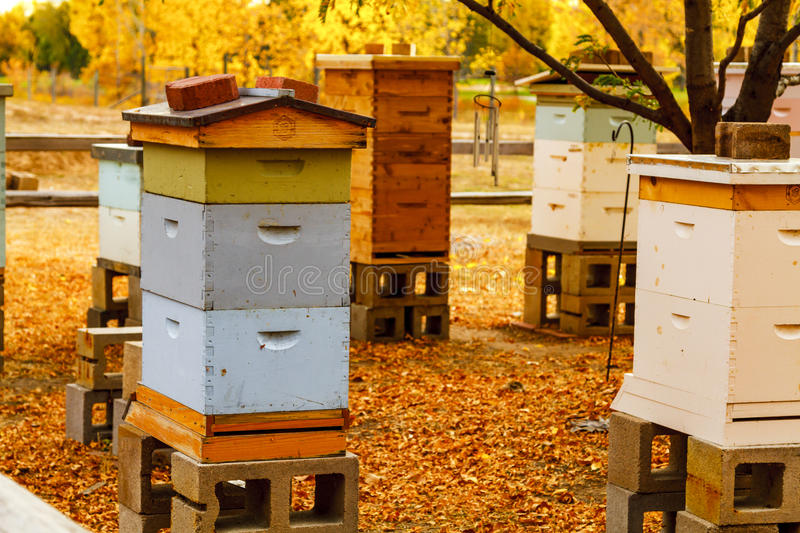 Aged Wooden Bee Hives in Autumn Setting. Colorful aged wooden bee hives in autumn setting with brilliant fall color and fallen leaves royalty free stock image
