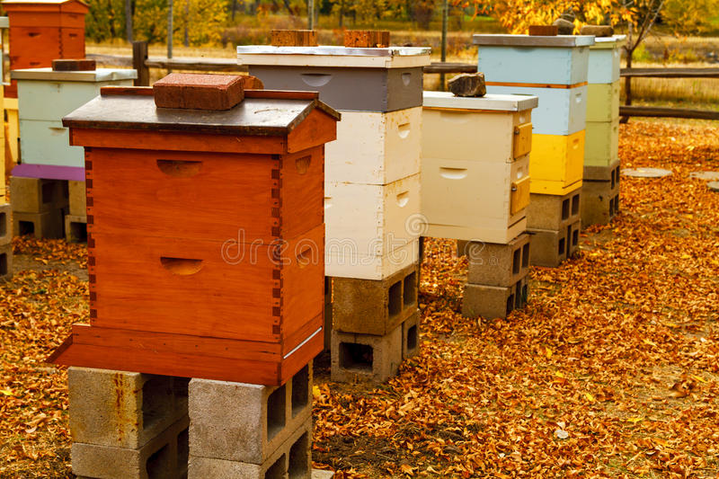 Aged Wooden Bee Hives in Autumn Setting. Colorful aged wooden bee hives in autumn setting with fallen leaves stock images