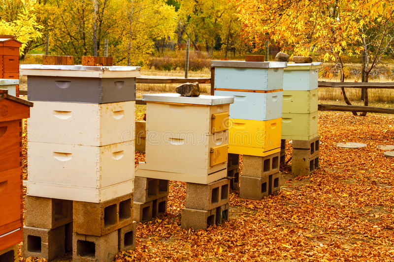 Aged Wooden Bee Hives in Autumn Setting. Aged wooden bee hive boxes in autumn setting with bees making honey stock photos