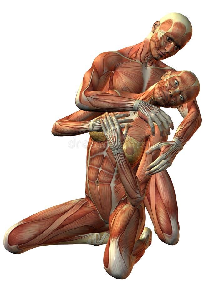 Agenouillement d'homme et de femme de muscle illustration stock