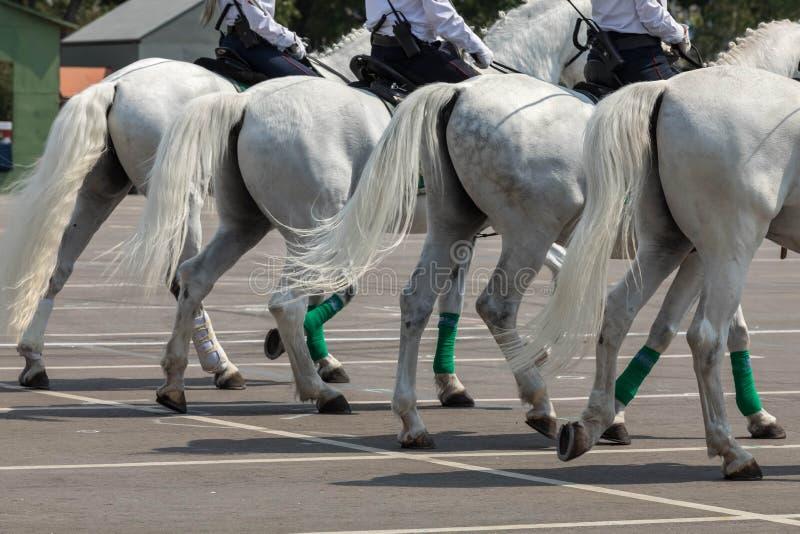 Agentes da polícia do cavalo montado em cavalos do março branco da cor na rua da cidade Vista traseira fotografia de stock royalty free