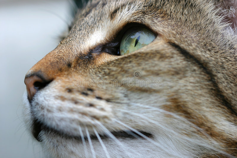 Download Aggeggio immagine stock. Immagine di felino, disteso, basette - 125203