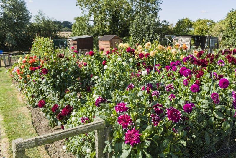 Aggiudicazione, giardino comunitario con fiori fotografie stock