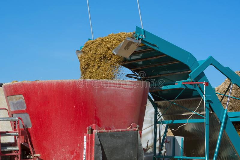 Aggregatet för extraktionen av ensilage från gropen laddar liten-snittet mat royaltyfri bild