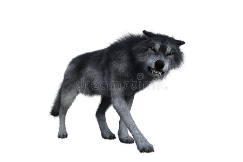 Aggressiva Grey Wolf stock illustrationer