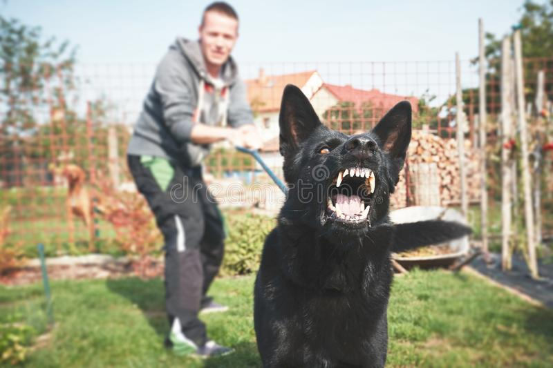 Aggressive dog is barking. Young man with angry black dog on the leash stock photo