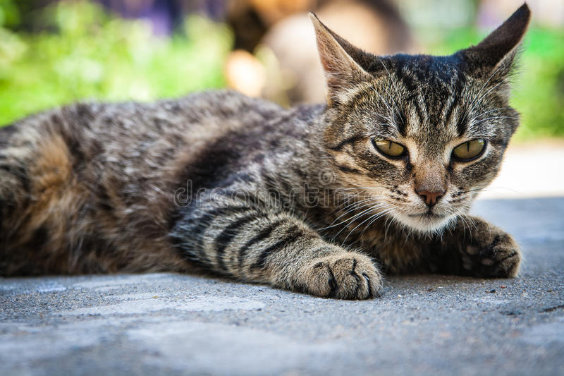 Download Aggressively Tuned Cat Lies Stock Photo - Image: 32160292