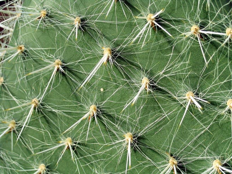 Aghi del cactus fotografie stock