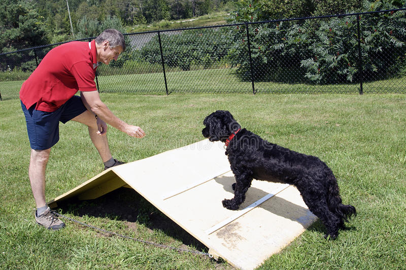 Download Agility Training - Portuguese Water Dog Stock Image - Image: 15425975