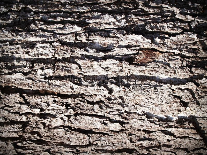 Aging, Bark, Detail Free Public Domain Cc0 Image
