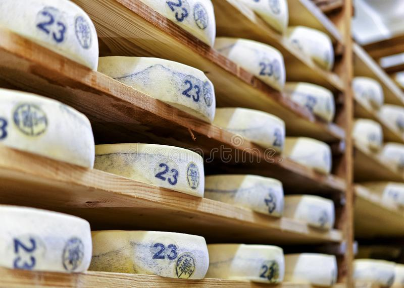 Aging Gruyere de Comte Cheese at maturing cellar in creamery. Aging Gruyere de Comte Cheese on wooden shelves at maturing cellar in Franche Comte creamery in royalty free stock photo