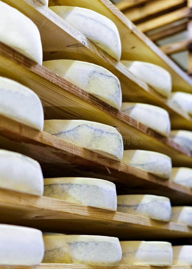 Aging Gruyere de Comte Cheese in maturing cellar at creamery. Aging Gruyere de Comte Cheese on wooden shelves in maturing cellar of Franche Comte creamery in stock photos
