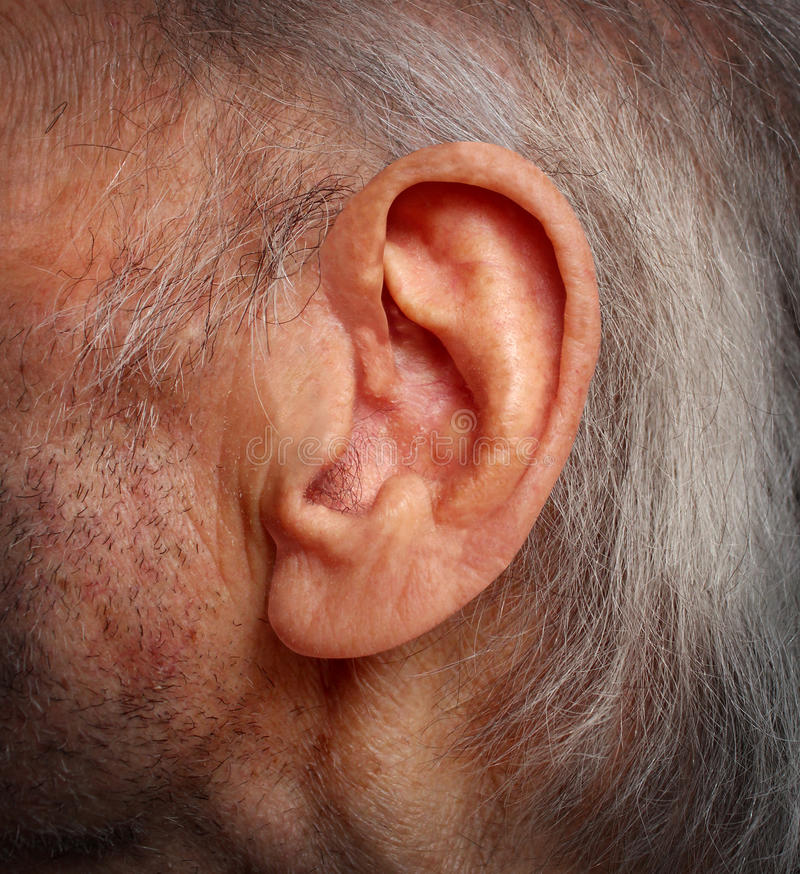Aging Hearing Loss. With an elderly ear close up of an old man with grey hair as a health care medical concept of losing the ability and human sense of hearing stock photography