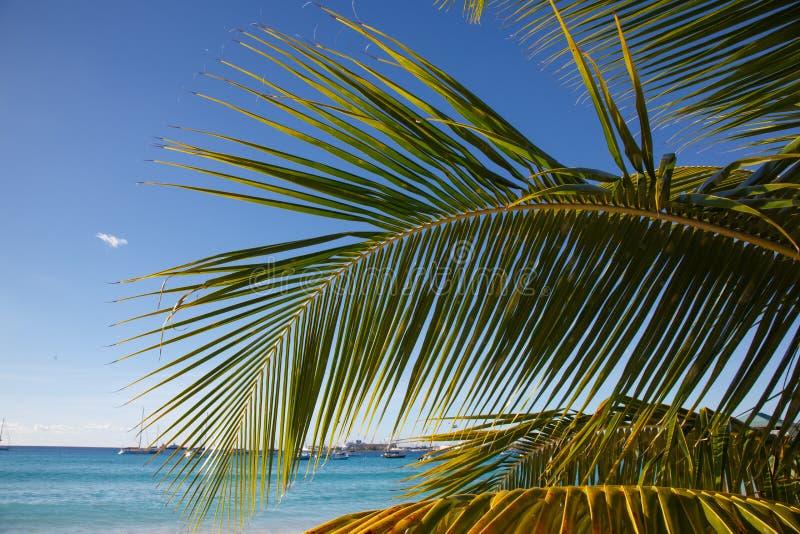 Aginst da folha da palmeira o céu azul e o mar fotos de stock