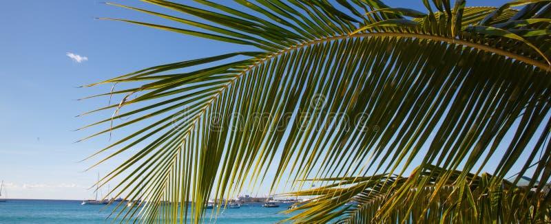 Aginst da folha da palmeira o céu azul e o mar imagem de stock