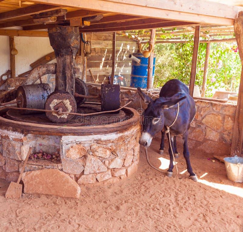 AGIOS NIKOLAOS, GRECIA - 29 DE JULIO DE 2012: Pres del burro y de la antigüedad fotos de archivo