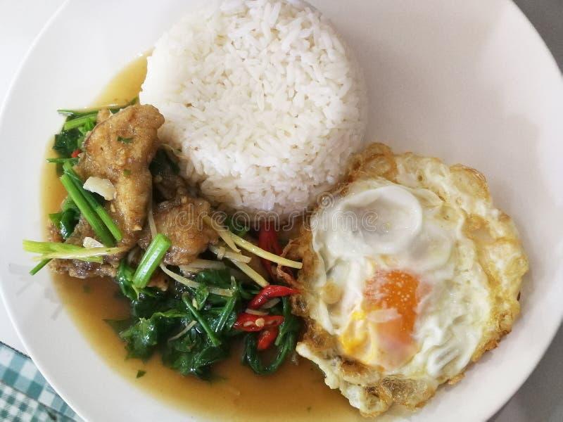 Agitación frita curruscante de los pescados con las hojas del apio servidas con arroz y el huevo frito fotos de archivo libres de regalías