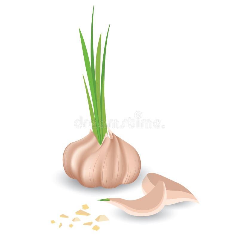 Aglio e piccolo aglio affettato del ‹del †del ‹del †su un fondo bianco royalty illustrazione gratis
