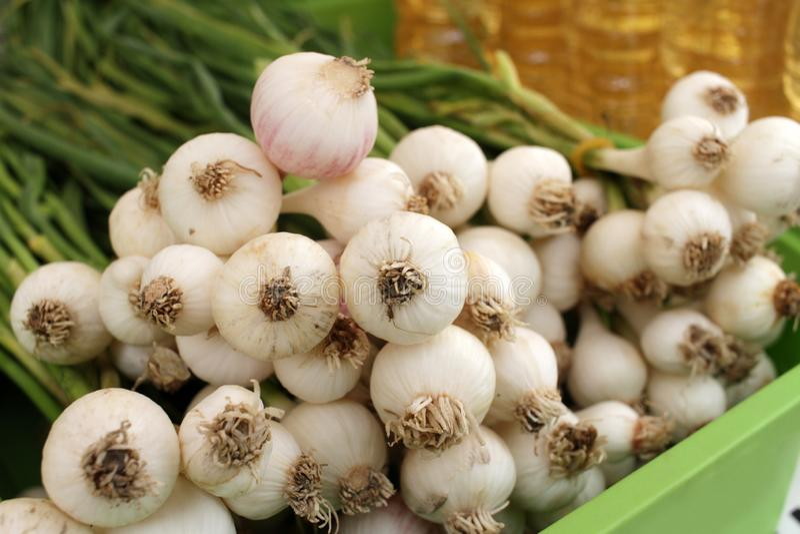 Aglio verde - ingrediente di alimento piccante naturale fresco immagine stock