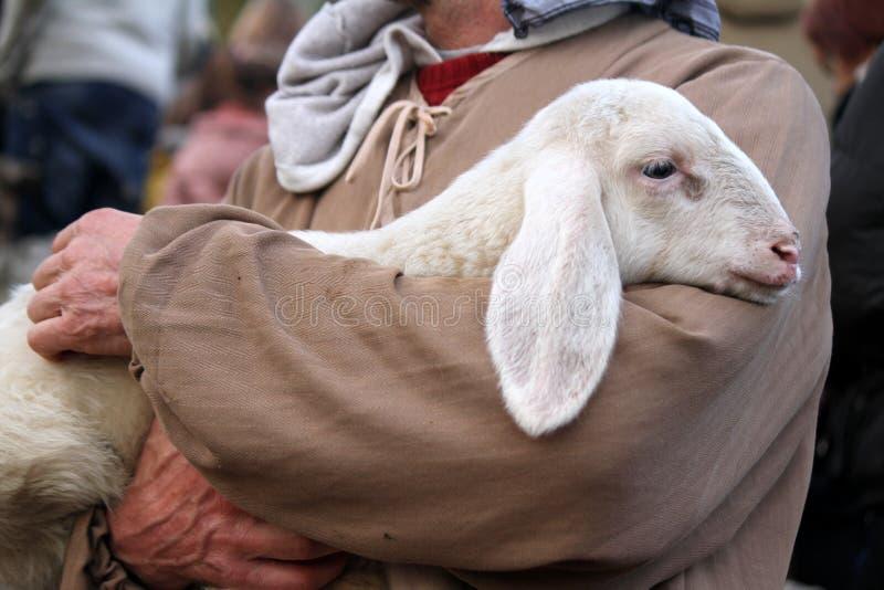 Agnello con il pastore fotografia stock libera da diritti
