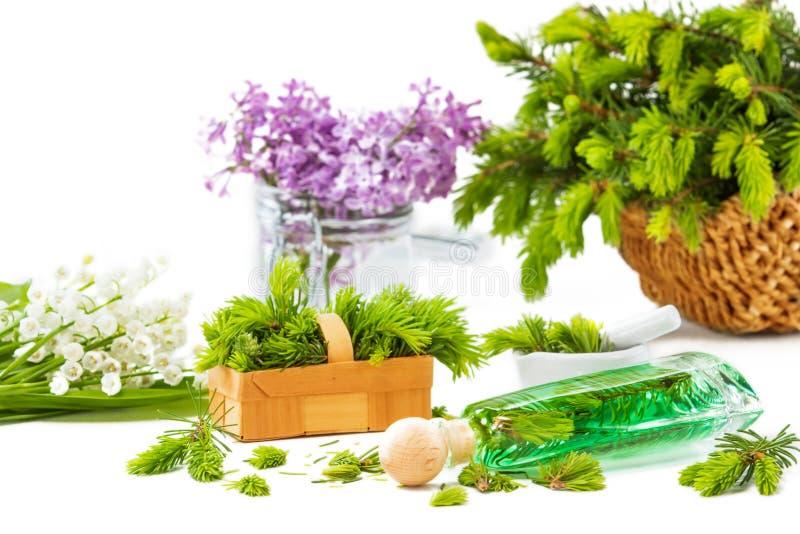 Ago attillato cattivo, piante medicinali, piante aromatiche immagine stock