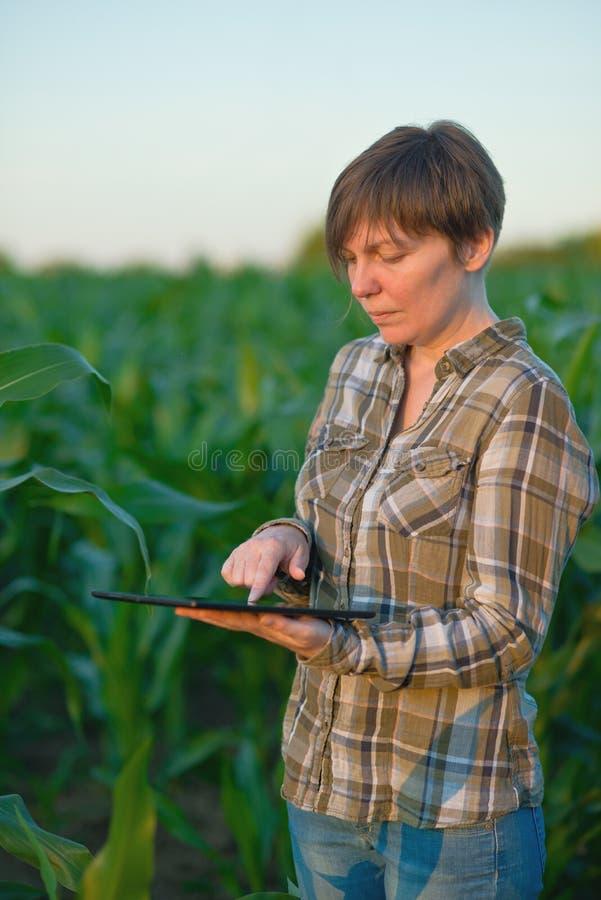 Download Agrónomo Con La Tableta En Campo De Maíz Imagen de archivo - Imagen de ingeniería, agrónomo: 42433987