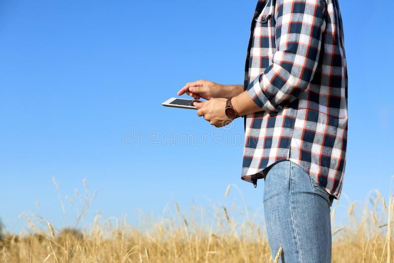 Agrónomo con la tableta en campo de trigo, para el texto Cosecha de grano de cereal fotografía de archivo libre de regalías