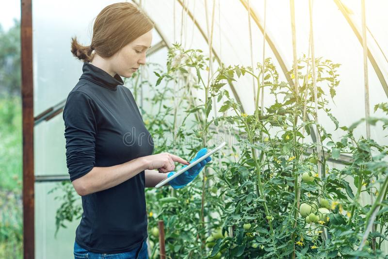 Agrónomo del especialista de la mujer que sostiene una tableta Producción respetuosa del medio ambiente en granjas fotos de archivo