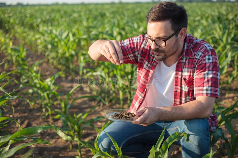 Agrónomo o granjero joven serio que recoge y que analiza muestras del suelo en una granja del maíz fotos de archivo
