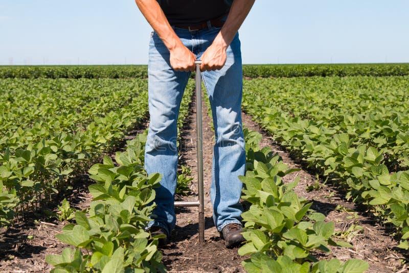 Agrónomo Using una tableta en un campo agrícola foto de archivo libre de regalías