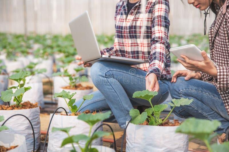 Agrônomo examinando planta em campo de melão, fazendeiro casal e pesquisador analisando planta de melão fotos de stock