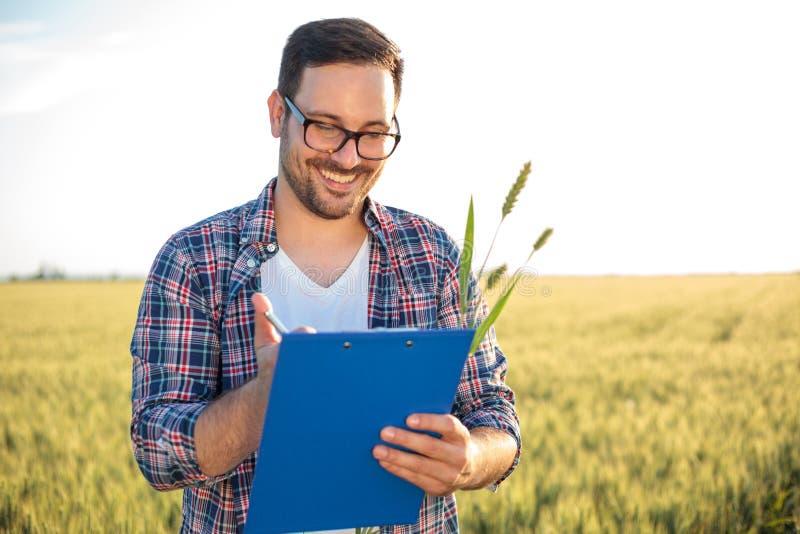 Agrônomo ou fazendeiro novo de sorriso que inspecionam o campo de trigo antes da colheita, redigindo dados a uma prancheta imagens de stock