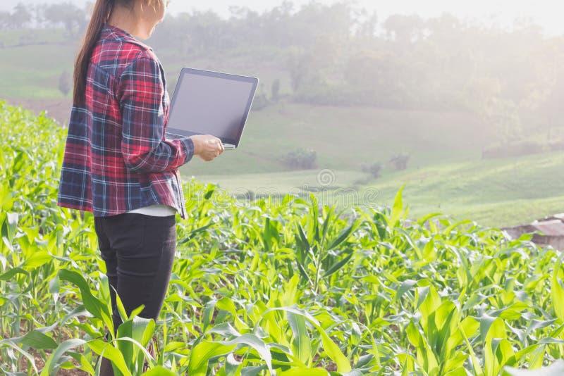 Agrônomo que analisa cereais com laptop foto de stock
