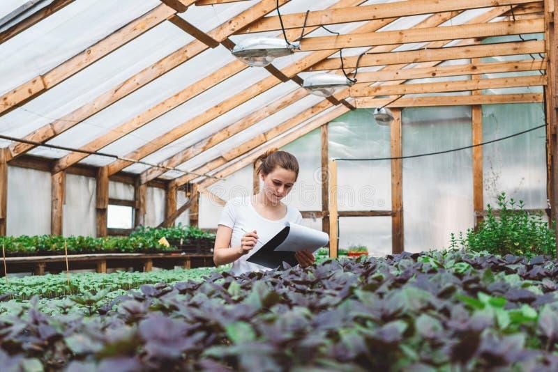 Agr?nomo da jovem mulher que inspeciona plantas na estufa foto de stock