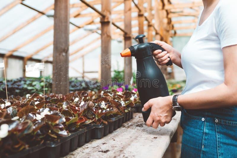 Agr?nomo da jovem mulher que inspeciona plantas na estufa foto de stock royalty free
