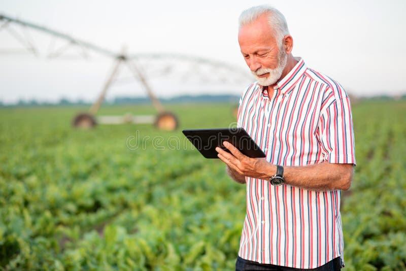 Agr?nomo ou fazendeiro superior feliz e satisfeito que usa uma tabuleta no campo do feij?o de soja foto de stock royalty free