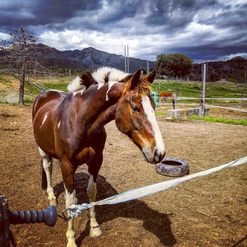 Agradable encontrarle de caballo imagen de archivo libre de regalías