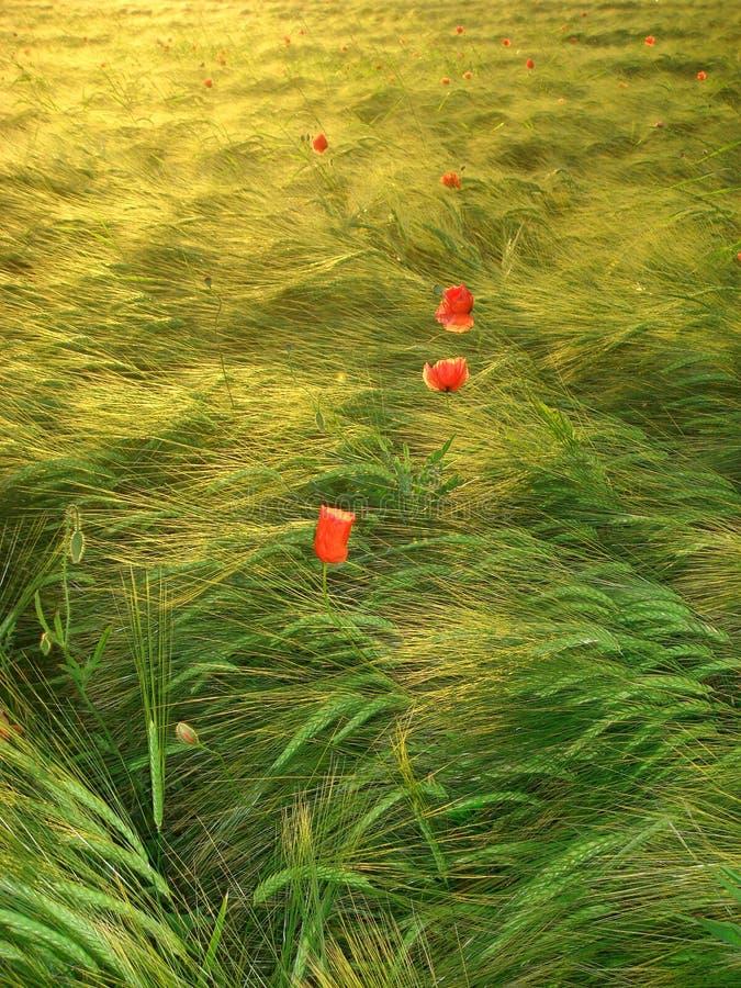 Agrar 249 lizenzfreie stockbilder