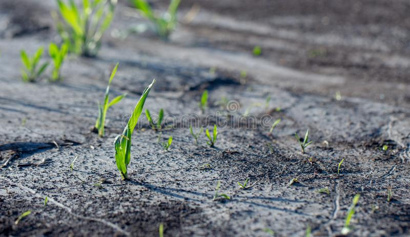 Agrarian fields after heavy rain, deposits of chernozem and various debris on the field stock photos