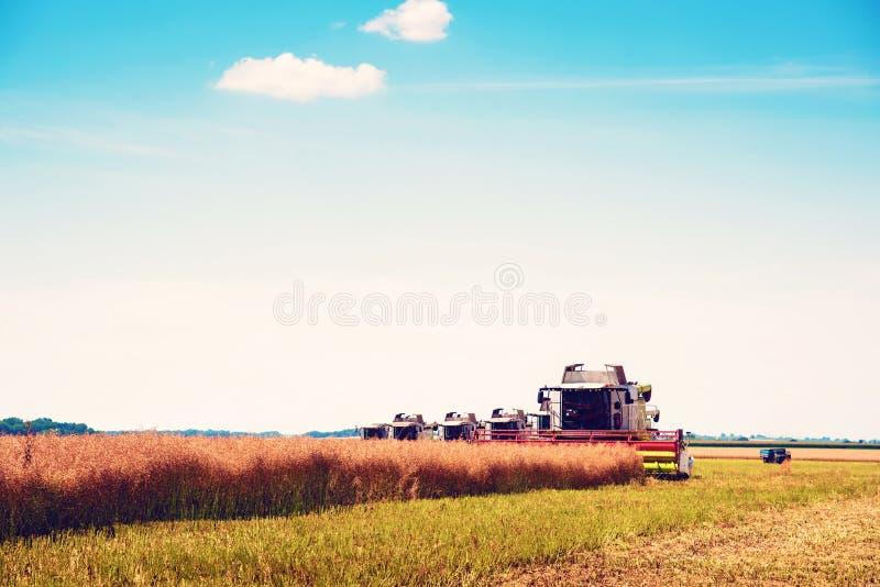 Agrarny przemysłowy krajobraz z syndykatem który zbiera żniwo na polu w słonecznym dniu, dobrobyt, bezpieczeństwo żywnościowe, zdjęcie stock