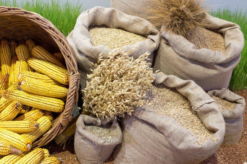 Agrarprodukte sortiert stockbilder